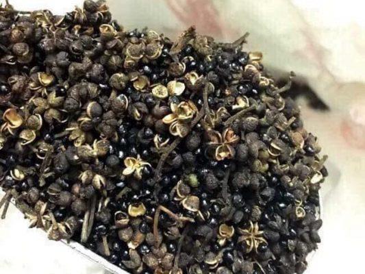 hạt mắc khén to loại 1, cửa hàng bán hạt mắc khén tại TPHCM